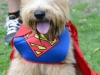 Super-Wheaten