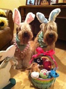 Wheatens of the Month Sophie and Winston in Easter outfits