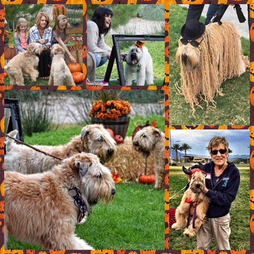 Wheaten Fun Day 2016 featured images